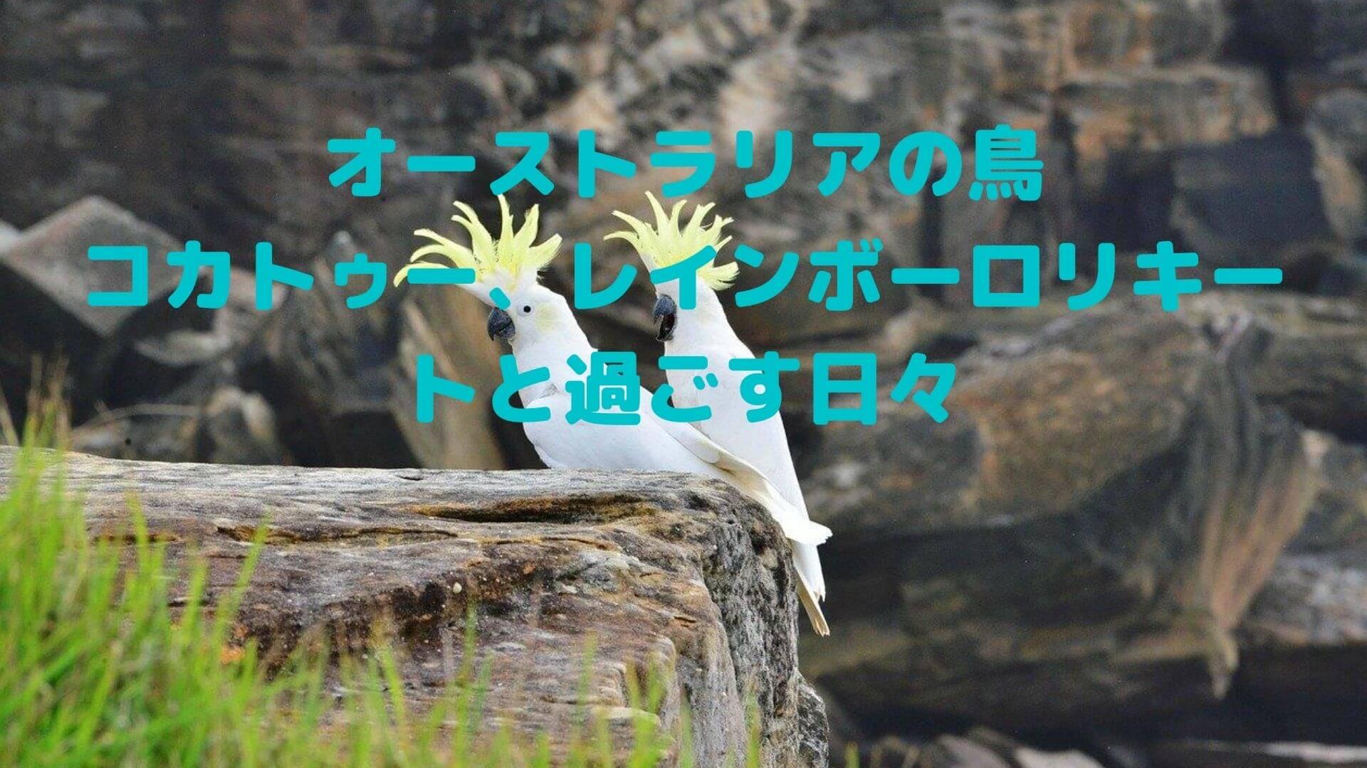 オーストラリアの鳥の写真