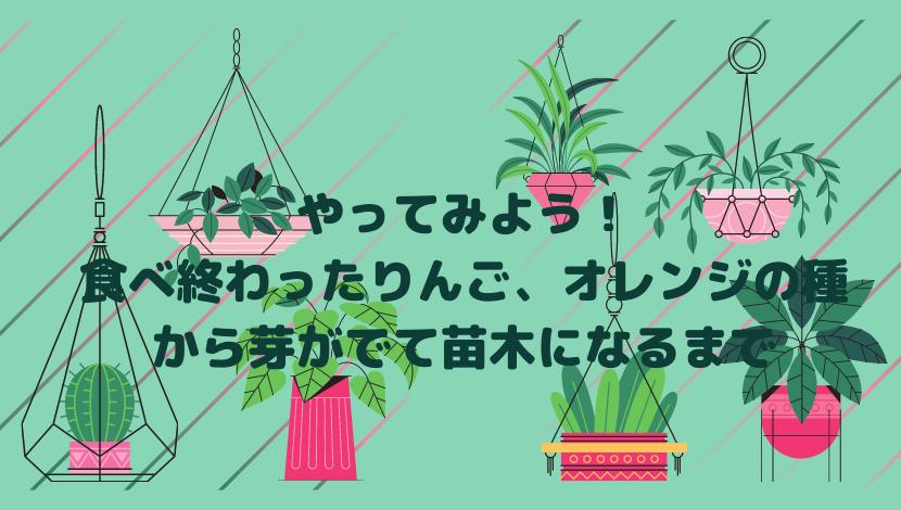 植物のイラスト画像