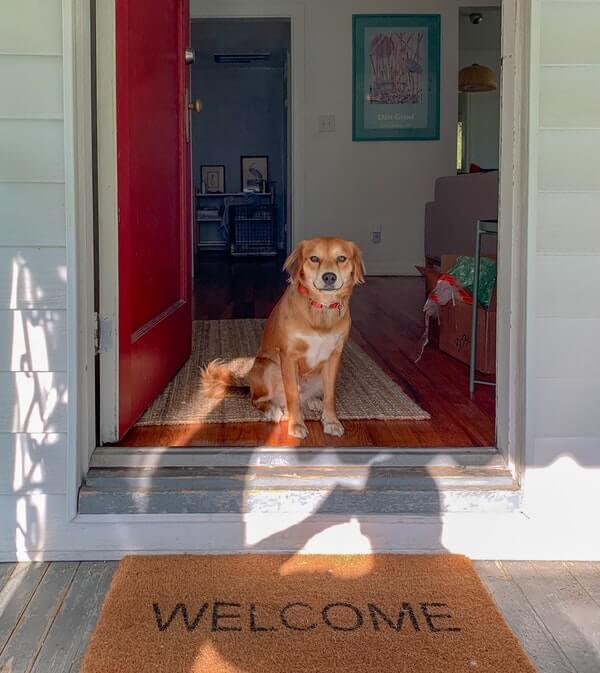 犬が玄関でお出迎えする様子